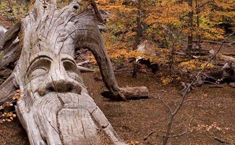 Bosque Tallado En El Bolson Triptio